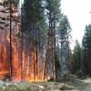 London Drugs, Loblaw aid in B.C. wildfire relief effort
