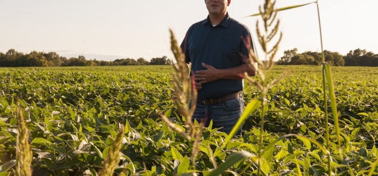 Kellogg grant expands Illinois conservation program supporting farmers