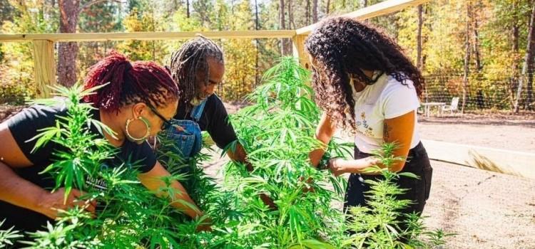 New mentor program for black hemp farmers announced by Charlotte's Web
